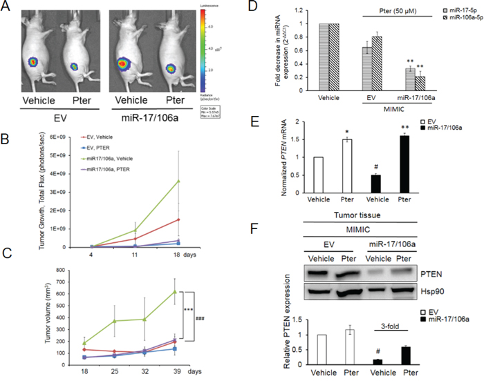 Pterostilbene diminishes the miR-17/106a-promoted tumor growth in prostate cancer xenografts.