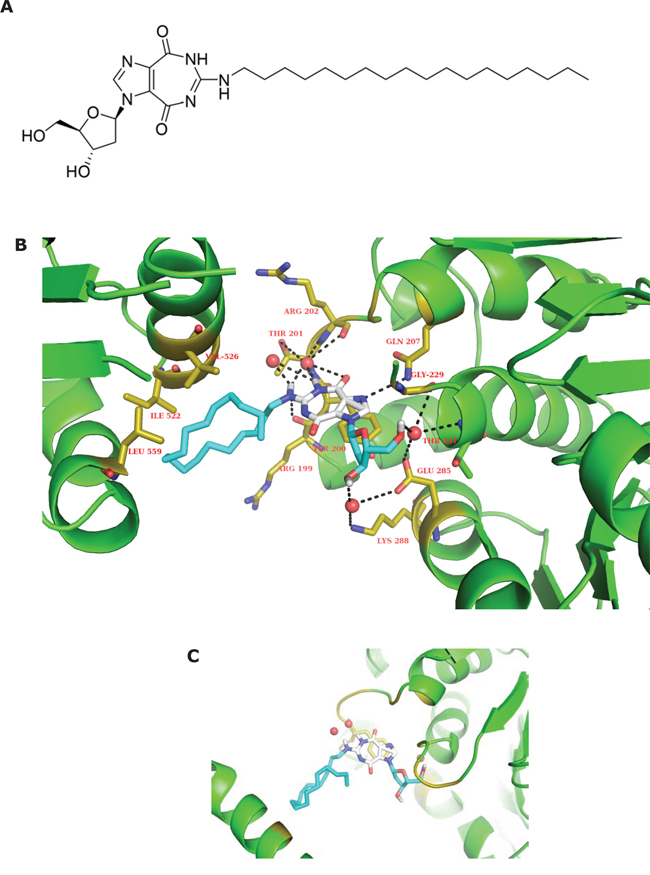 Structure of NZ51 and molecular modeling structure of NZ51 binding to DDX3.