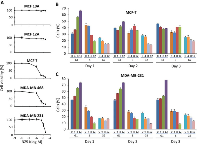 Effect of NZ51 on cell viability of normal breast cell lines and breast cancer cell lines as well as on cell cycle progression of MCF-7 and MDA-MB-231.
