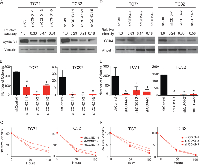 Targeting CDK4 and cyclin D1 with shRNA mediated knockdown results in impairment in both cell growth and colony formation.