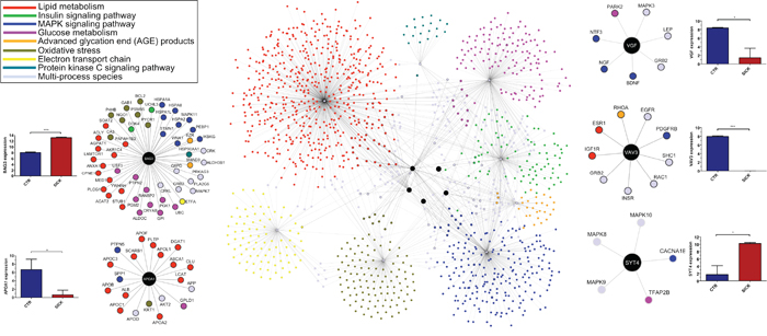 Functional interaction networks of the 5 most differentially expressed genes between AT and AT with T2D, and pancreas and pancreas with T2D.