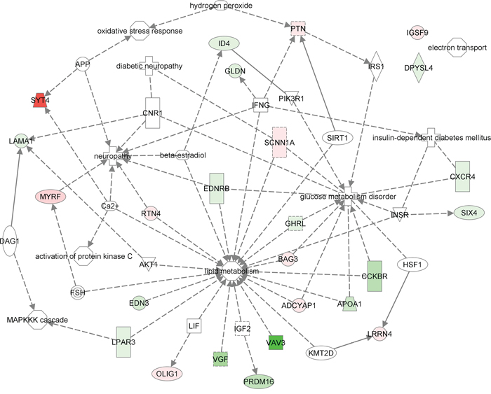 In-silico functional enrichment analysis of 25 differentially expressed genes between AT and AT with T2D, and pancreas and pancreas with T2D.