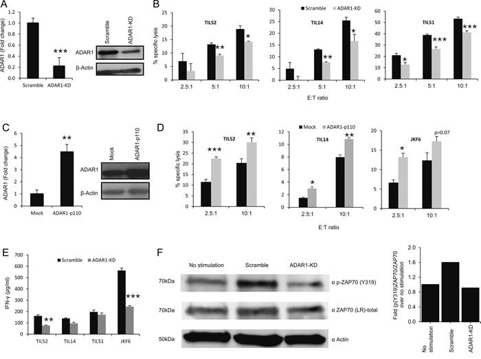 ADAR1 regulates melanoma immune resistance.