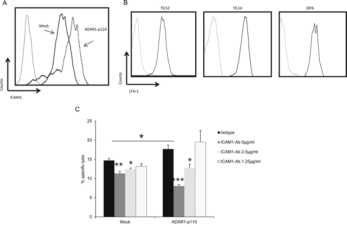 ADAR1 regulates ICAM1 expression, which contributes to TIL mediated killing.
