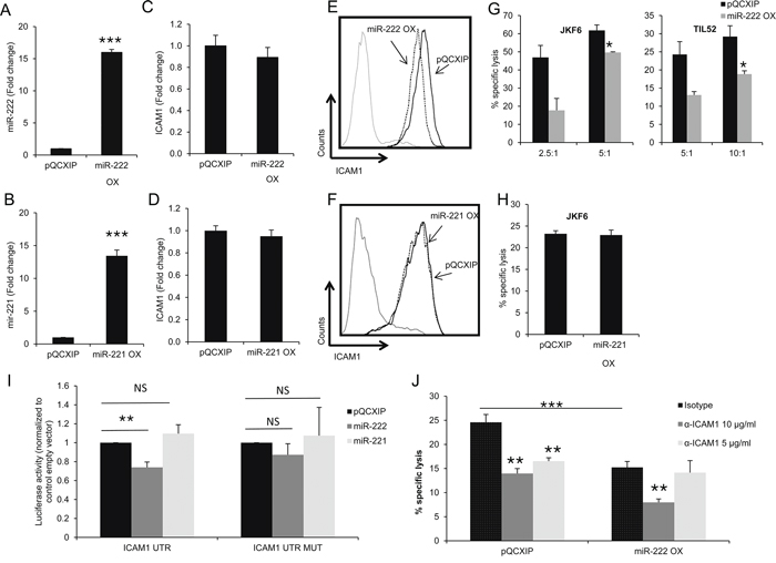 miR-222 suppresses ICAM1 expression at the protein level and enhances immune resistance.
