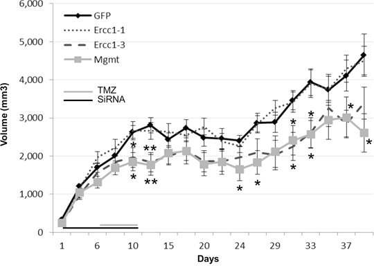 Therapeutic effects of the combined effect with TMZ and Ercc1-siRNA in vivo.