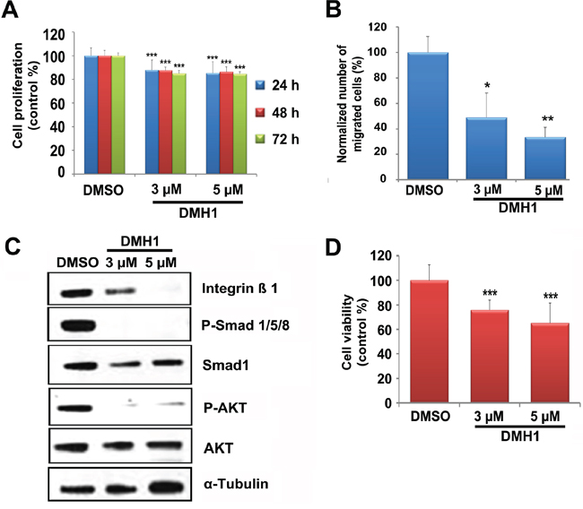 Effect of DMH1 on BMP downstream signaling and PCC cell growth.