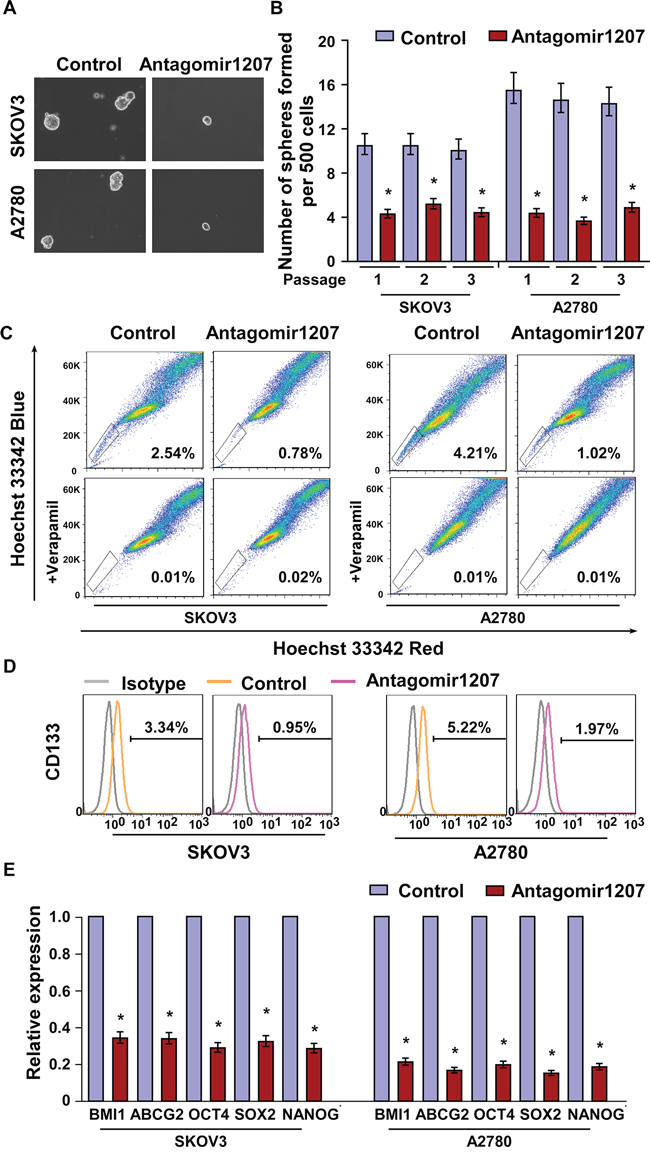 MiR-1207 inhibition reduces stem cell–like traits in ovarian cancer.