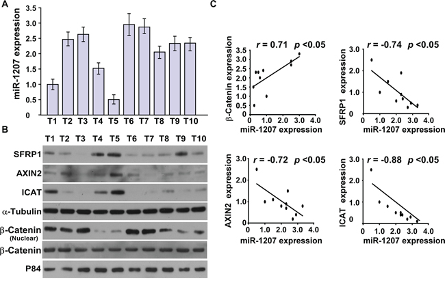 MiR-1207 levels were correlated with SFRP1, Axin2, ICAT, and nuclear β-catenin expression in ovarian cancer clinical tissues.
