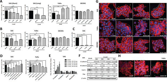 Hyperglycemia increased cell motility via up-regulated epithelial-mesenchymal transition (EMT) and F-actin rearrangement.