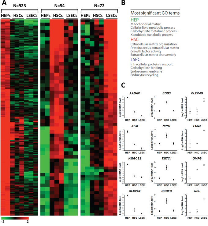 Gene expression profiling of HSCs, LSECs and HEPs identifies liver cell type selective gene expression patterns.