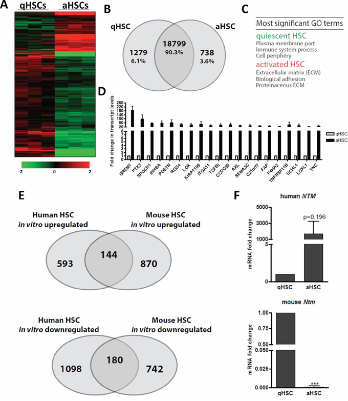 The gene expression changes elicited by in vitro HSC activation poorly correlate between mouse and human.