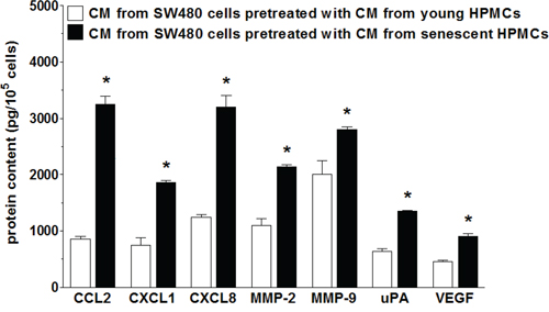 Secretory profile of SW480 cells subjected to conditioned medium (CM) generated by young and senescent HPMCs.