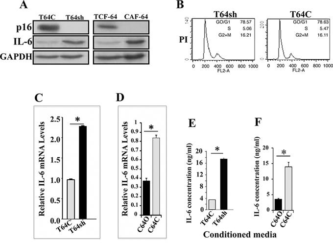 p16 suppresses IL-6 expression and secretion.