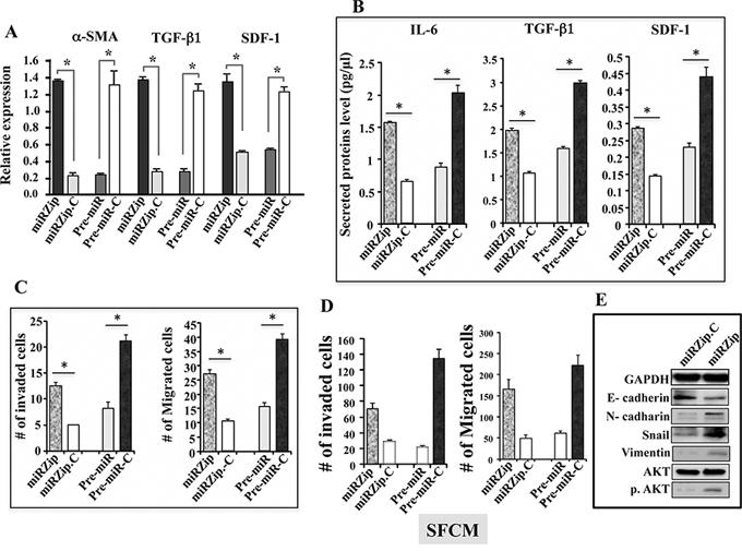 miR-146b-5p represses breast stromal fibroblasts.
