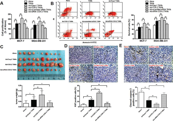 COX-2 in macrophages promotes breast cancer growth.
