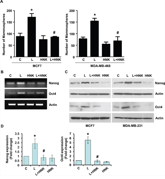 Honokiol abates the stimulatory effect of leptin on mammosphere-formation-potential and acquisition of stem-like properties in breast cancer cells.