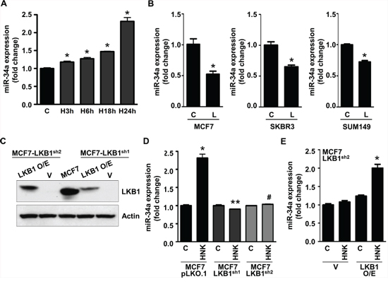 Honokiol upregulates miR-34a in LKB1-dependent manner in breast cancer cells.