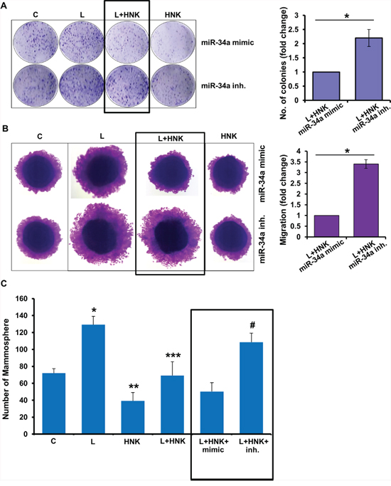 Role of miR-34a in honokiol-mediated inhibition of oncogenic actions of leptin.