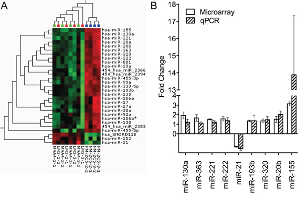 Heat map depicting unsupervised hierarchical clustering of metastatic and non-metastatic cell lines based on the differentially expressed miRNA measured by microarray and validation of miRNA alteration by qRT-PCR.