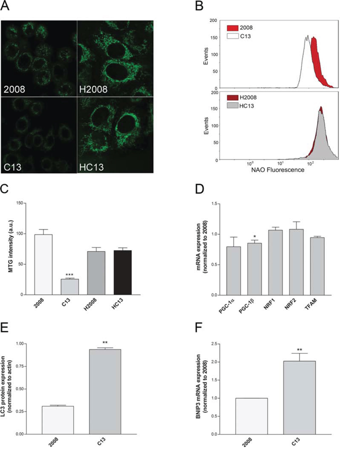 Cisplatin-resistant cells present a reduced mitochondrial mass.