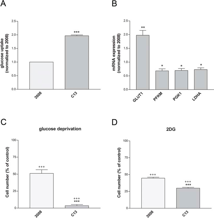Cisplatin-resistant cells show an increased dependency to glucose.