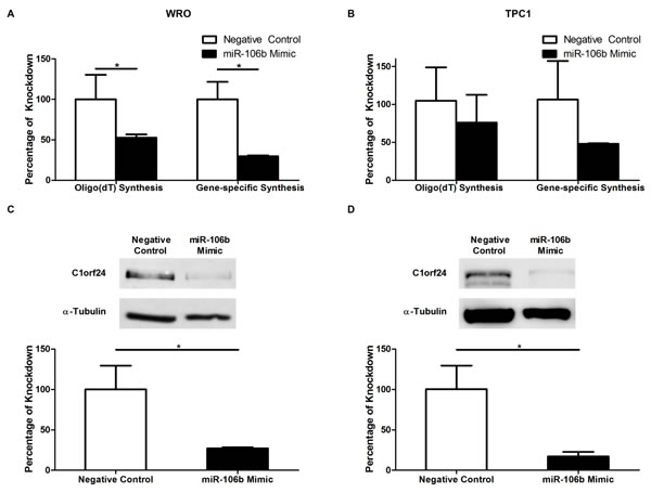 The effect of miR-106b on the expression of