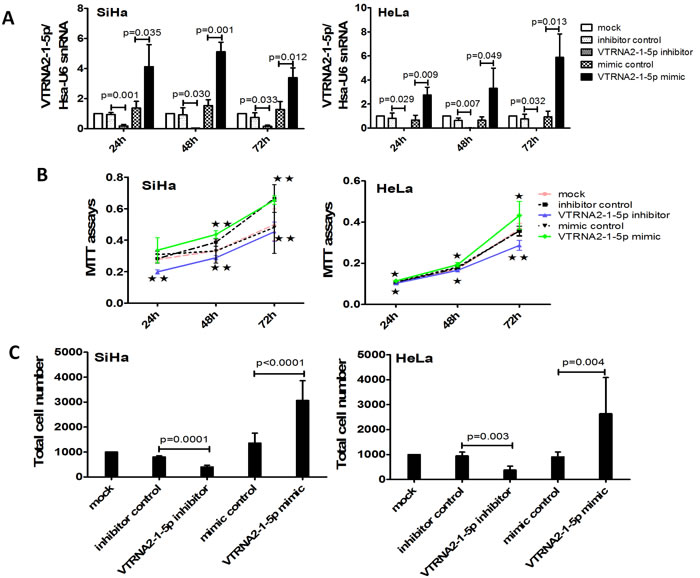 VTRNA2-1-5p knockdown decreases and overexpression enhances cervical cancer cell growth and invasion