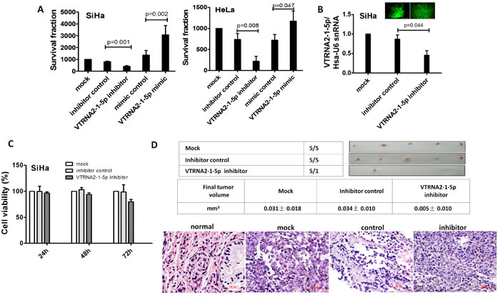 VTRNA2-1-5p promotes tumor cell growth