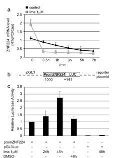 Imatinib enhances ZNF224 mRNA expression via transcriptional mechanism.