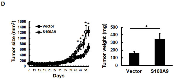 Oncotarget | Elevated S100A9 expression in tumor stroma