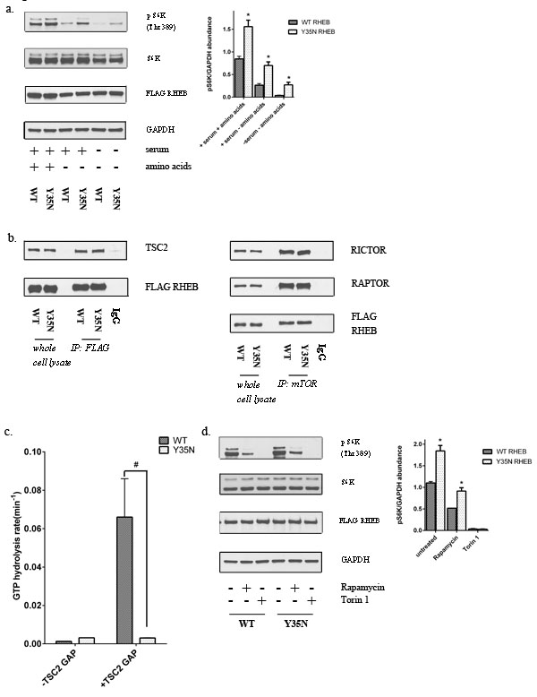 Y35N RHEB mutation in ccRCC causes mTORC1 hyperactivation by resistance to TSC2 GAP activity.