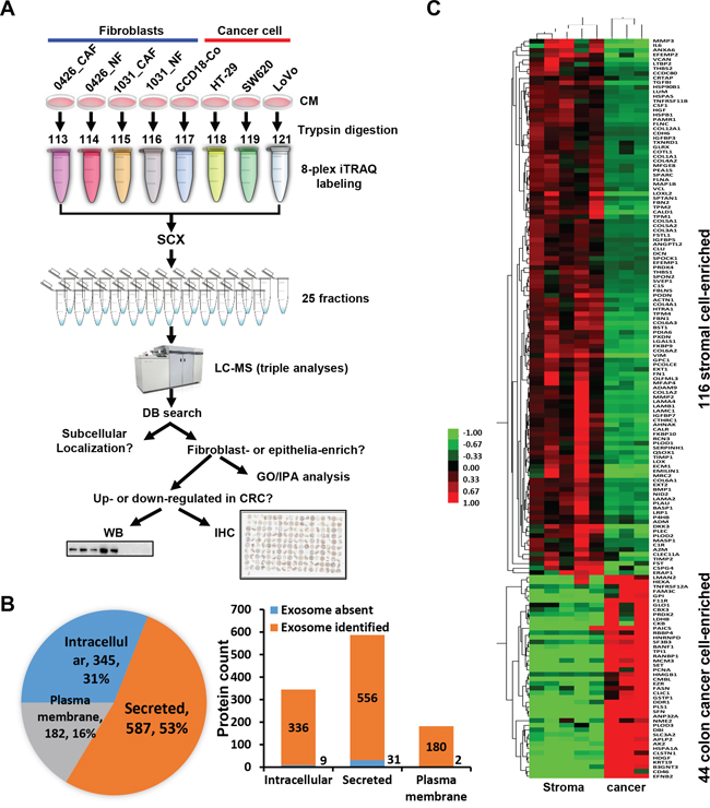 Quantitative proteomic analysis of the secretomes of colon cancer cells and the stromal cells.