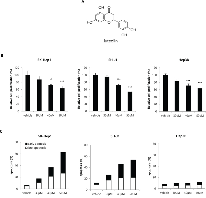 Effect of the VRK1 inhibitor luteolin on HCC cell proliferation and apoptosis.