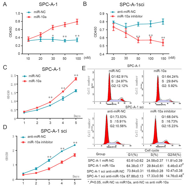 MiR-10a enhances cell proliferation through influencing G2/M cell cycle of NSCLC cells.