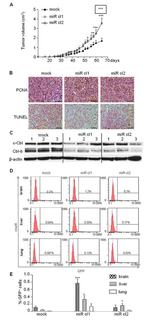 MiR-675 promoted tumor growth and metastasis.