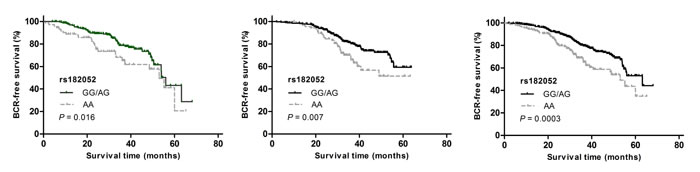 Kaplan-Meier survival curves for BCR-free survival according to