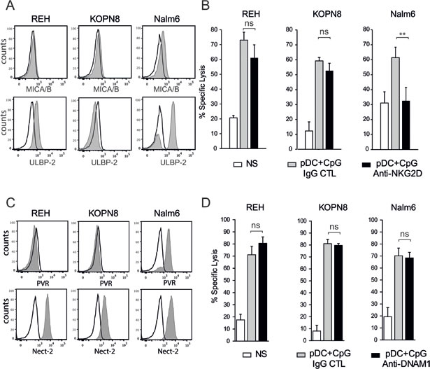 NKG2D, but not DNAM1, plays a role in pre-B ALL lysis by activated NK cells.