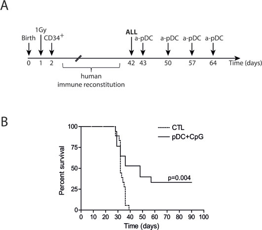 Activated pDC infusions delay leukemia onset in humanized mice.