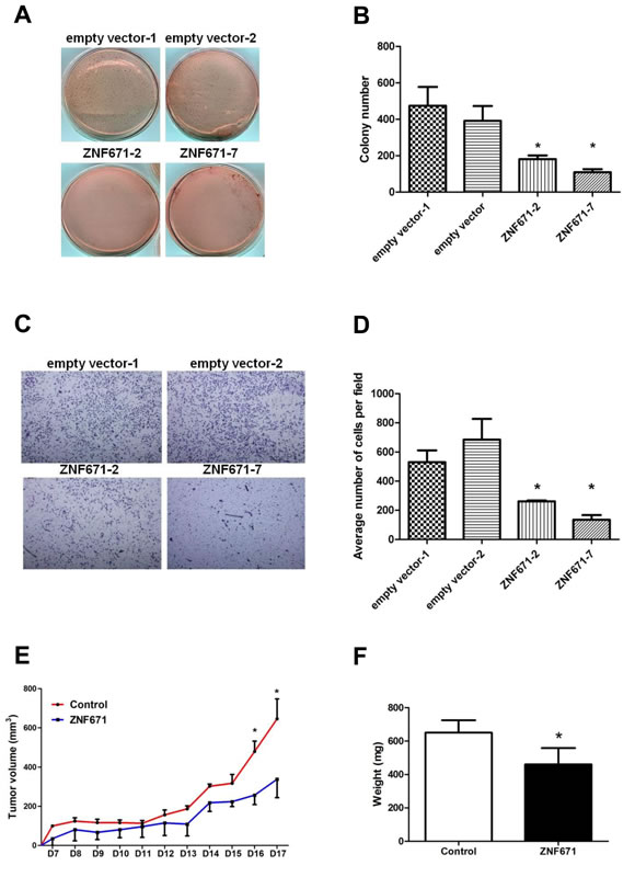 Ectopic expression of ZNF671 inhibits tumor growth and invasion in UMUC3 bladder UC cells.