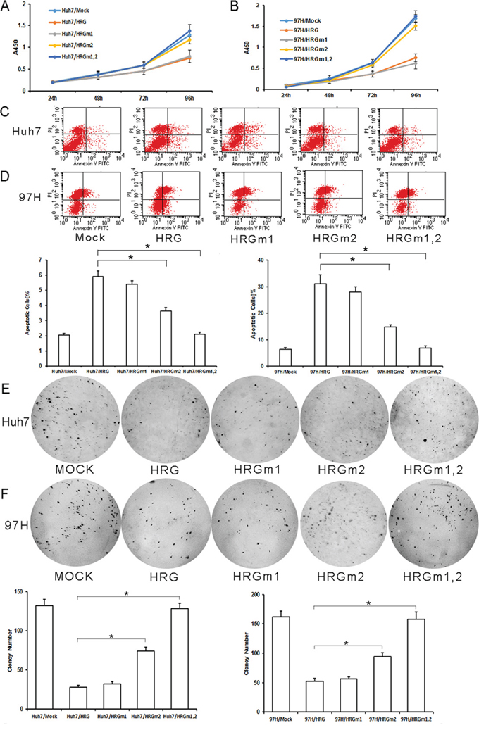 Effect of HRG glycosylation site mutation in Huh7 and MHCC-97H HCC cells.
