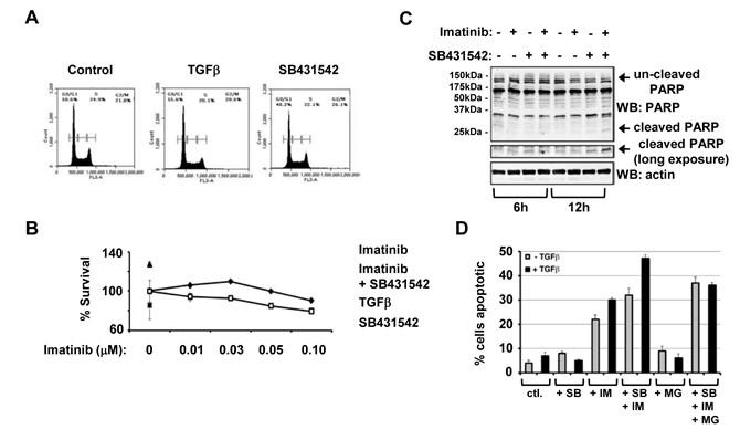 Inhibition of type TGFβ receptor kinase enhances Imatinib mediated CML cell death.