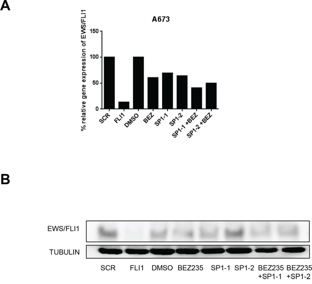 SP1 knock down in combination with BEZ235 treatment affects EWS/FLI1 levels.