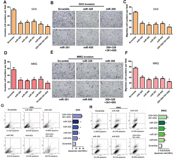 MiR-329, miR-300, miR-381 and miR-655 decrease cell motility in vitro and induce cell apoptosis of GH3 and MMQ cells.