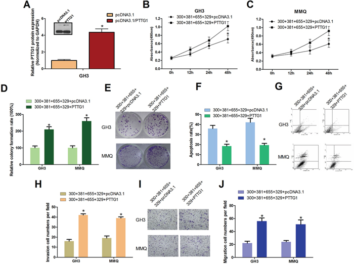 PTTG1 Overexpression Counteracts miR-329, miR-300, miR-381 and miR-655 induced pituitary tumor cell malignant inhibition.