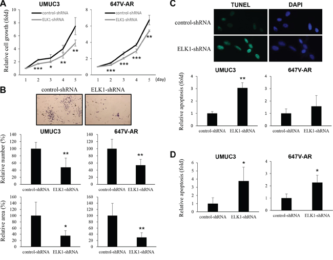 Effects of ELK1 inactivation on bladder cancer cell proliferation.