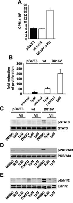 Expression of the D816V c-Kit mutant mediates IKK-dependent transformation.