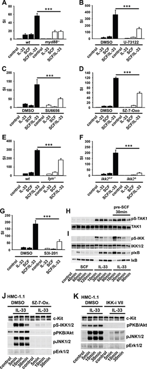 Activated c-Kit influences IL-33-induced signaling and effector functions in BMMCs and HMC cells.