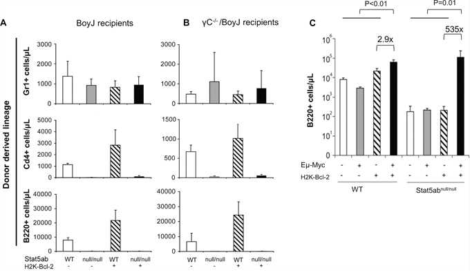 Expansion of peripheral blood Stat5-deficient B-cell precursors by the combined expression of Myc and Bcl-2.