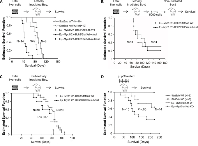 Faster initiation but not progression of B-ALL in the absence of Stat5.